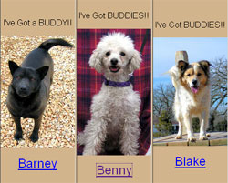 Rescue Dogs you can Adopt