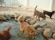 doggie-spa2