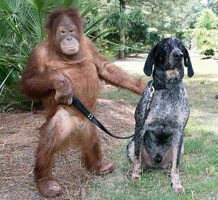 Dog-&-orangutang3