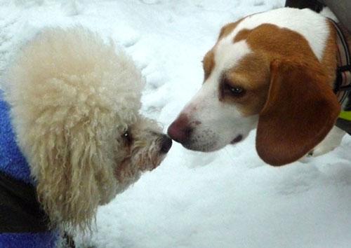 Doggie First Kiss My Favorite Doggie Photo Bloggie
